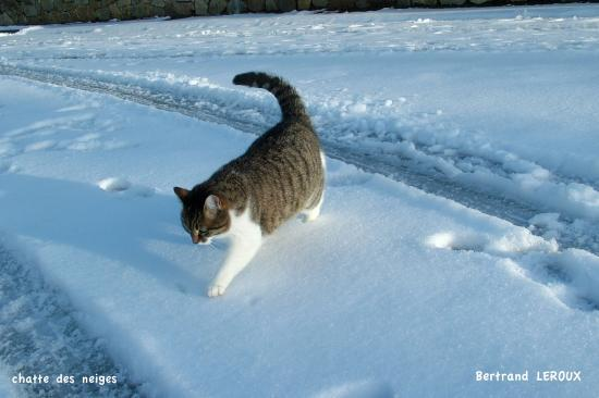 chat des neiges